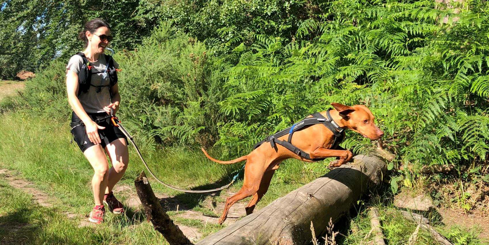 Dog Jumping Over Tree